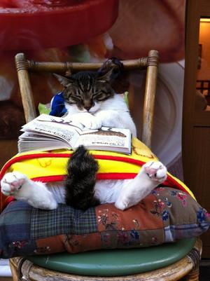 Cat1105_tumblr_m6cfltj6bt1qa9omho1_