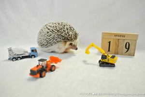 Hedgehogcalendartumblr_oc4ozxiv011s