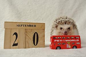 Hedgehogkalendartumblr_odrzaqdx1e1s
